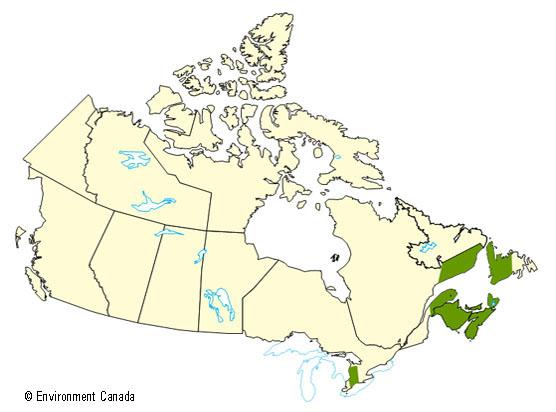 qua bec et provinces maritimes 2004 2005